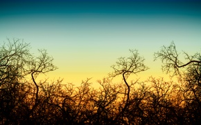 Picture Sunset, The sun, The sky, The evening, Sunrise, Trees, Branches, Landscape, Glow