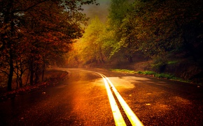 Picture forest, autumn, road