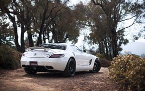 Picture white, white, SLS AMG, Mercedes Benz, rear view, wing, Mercedes Benz, trees sky, SLS AMG