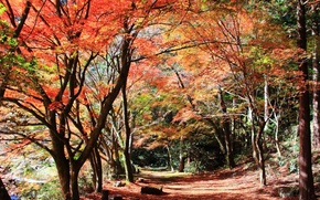 Picture trees, Autumn, leaves, stones, branches, path