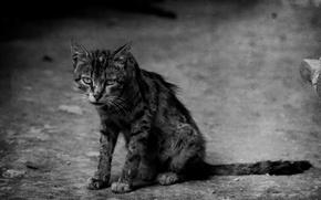 Picture cat, sad, hobo, shabby