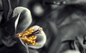 Picture stamens, petals, pistil, gracefully
