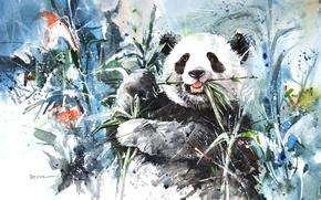 Picture figure, bamboo, bear, Panda, Panda