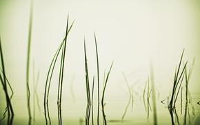 Picture grass, away, Volga