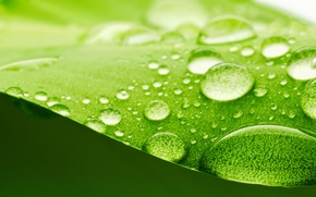 Picture surface, green, leaf, blur, water, widescreen, bokeh, full screen, refraction, light, widescreen, HD wallpapers., drops