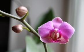 Picture macro, flowers, Archidea