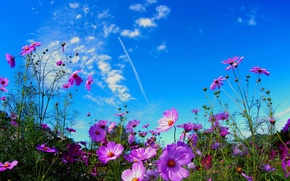 Picture photo, Flowers, The sky, Field