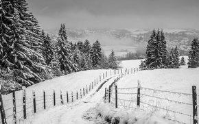 Picture misty, road, winter, snow, fog, hills, fence, village, valley, freeze, countryside, farm, foggy, mist, cloudy, ...
