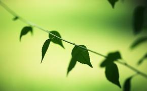Picture greens, leaves, macro, trees, green, background, tree, Wallpaper, vegetation, wallpaper, leaves, widescreen, leaves, background, leaves, …