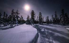 Picture winter, forest, snow, night