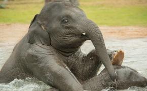 Picture water, bathing, elephants, elephants