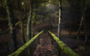 Picture forest, bridge, moss