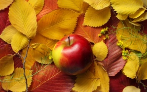Picture autumn, leaves, Apple