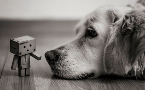 Picture look, box, dog, lies, black and white, Danbo, amazon, boxes