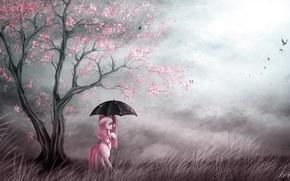 Picture birds, umbrella, art, pony, my little pony