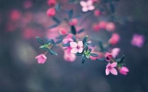 Picture flowers, nature, paint, colors, nature, flowers, bokeh, bokeh, 2560x1600