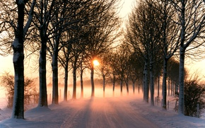 Picture light, trees, winter, snow, sun