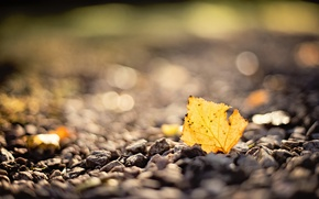 Wallpaper blur, macro, sheet, bokeh, autumn, stones