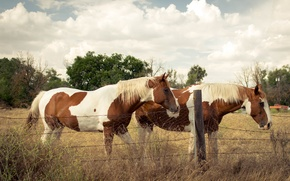 Picture nature, the fence, horses, horse