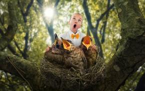 Picture socket, child, Chicks, The bird choir
