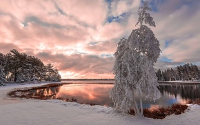 Picture snow, lake, tree, lake, snow, tree, winter landscape, winter landscape