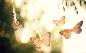 Picture the sky, macro, light, trees, butterfly, glare, background, mood, the wind, the air