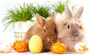 Wallpaper Rabbits, Easter, Eggs, Two, Animals