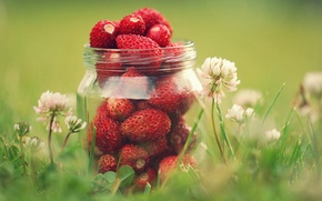 Picture greens, summer, grass, macro, flowers, nature, berries, strawberry, clover, jar