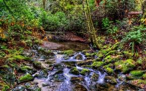 Picture forest, stream, stones, stream