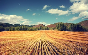 Picture field, summer, the sky, trees, landscape, nature, hills, photo