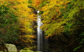 Picture autumn, forest, leaves, trees, rock, stones, waterfall, yellow