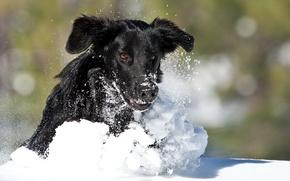 Wallpaper winter, snow, dog, running
