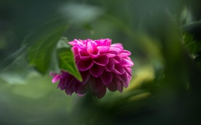 Picture flower, macro, green, background