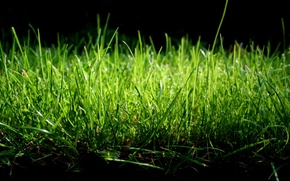 Wallpaper greens, nature, the gentle tones, grass macro