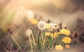 Picture grass, flowers, nature, background