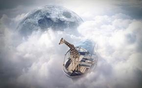 Picture giraffe, photomanipulation, sky sailor, finearts
