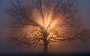 Picture the sun, branches, tree, morning, haze