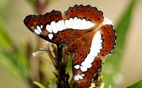 Picture pattern, butterfly, plant, wings, moth