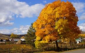 Picture autumn, nature, tree, paint, village