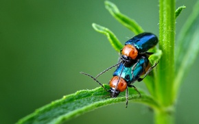 Picture BACKGROUND, PAIR, GREEN, INSECTS, STEM, BUGS
