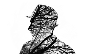 Picture man, branches, silhouette