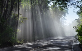Picture sky, sun, rays, trees, Road