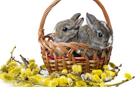 Picture rabbits, white background, basket, Verba, cubs, rabbits