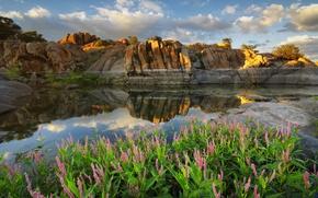 Picture clouds, flowers, lake, reflection, rocks, AZ, USA, Arizona, Prescott, Watson lake