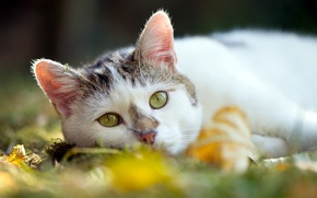 Picture cat, summer, background