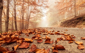 Picture autumn, macro, trees, landscape, nature, scene, forest, Misty, forest, trees, landscape, nature, autumn, macro, scene, …