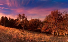 Picture field, autumn, the sky, trees, Nature, sky, trees, nature, autumn, fall