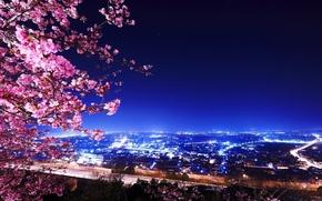 Picture the sky, the city, Sakura