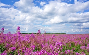 Picture summer, the sky, clouds, flowers, meadow