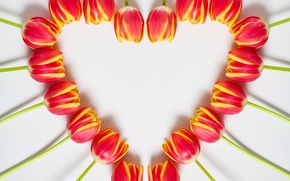Picture heart, spring, tulips, March 8, heart, beautiful, tulips, color, spring
